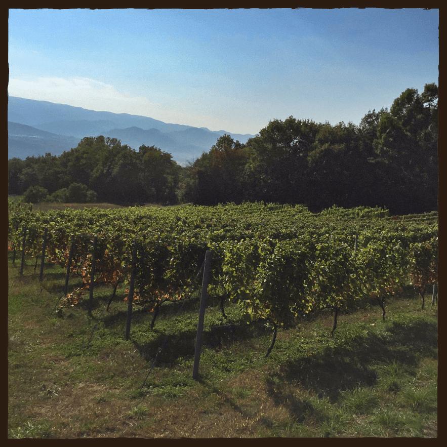 ワイン農園の様子